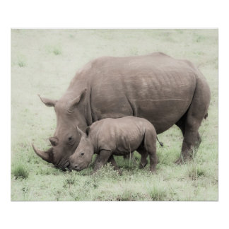 Weißes Nashorn u. Baby-Plakat Poster