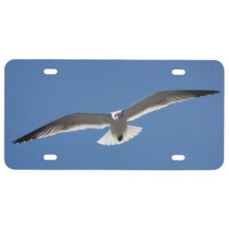 Weißes Seemöwemöven-Vogel Kfz-Kennzeichen US Nummernschild