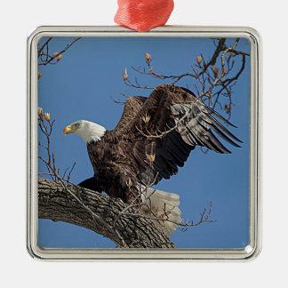 Weißkopfseeadler auf einem Baumast Quadratisches Silberfarbenes Ornament