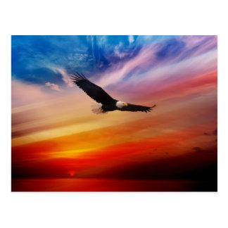 Weißkopfseeadler gegen einen patriotischen Himmel Postkarte
