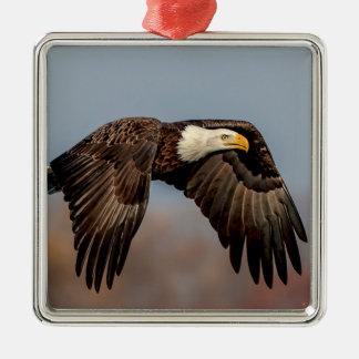 Weißkopfseeadler im Flug Quadratisches Silberfarbenes Ornament