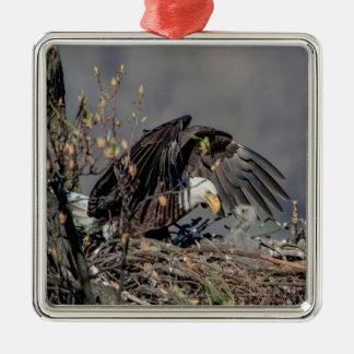 Weißkopfseeadler mit ihrem Baby Quadratisches Silberfarbenes Ornament