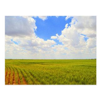 Weizen-Feld in Scott County, Kansas Postkarte