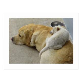 Welpen-Liebe - Labrador und gemischter Zucht Welpe Postkarten