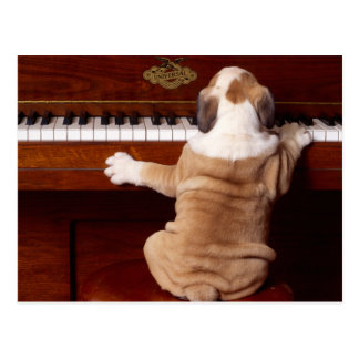 Welpen-Pianist Postkarte