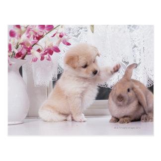 Welpen-und Schmierölniederdruck-Ohr-Kaninchen Postkarten