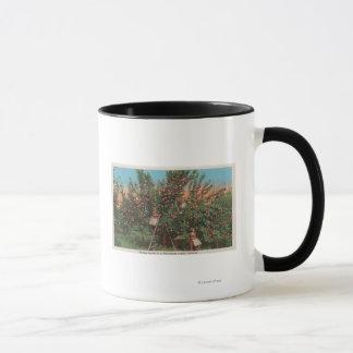 Wenatchee, WAView des Apfelgartens u. der Tasse