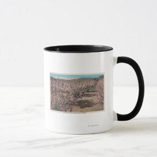Wenatchee, WAView von Apfelbäumen in der Blüte Tasse