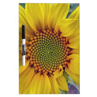 Wenig Sonnenblume Memoboard