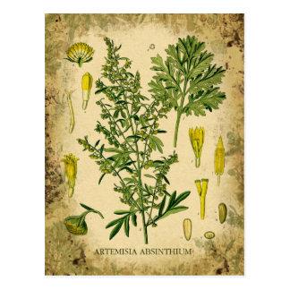Wermut-botanische Collage Postkarte