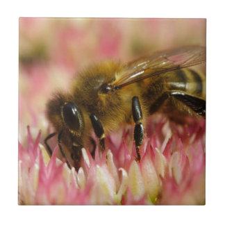 Western-Honig-Bienen-Makro Fliese
