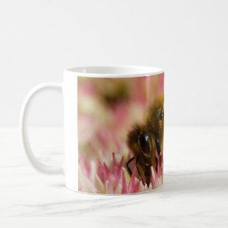Western-Honig-Bienen-Makro Kaffeetasse