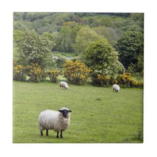 Western Irland, Dingle-Halbinsel Keramikfliese