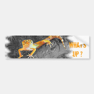 What's up? Gecko, leopard gecko, Autoaufkleber
