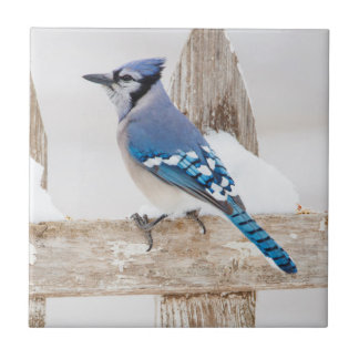 Wichita County, Texas. Blaues Jay 3 Keramikfliese