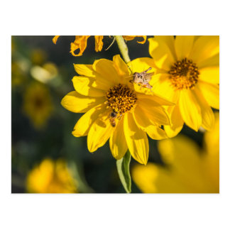 Wildblume mit Biene Postkarte
