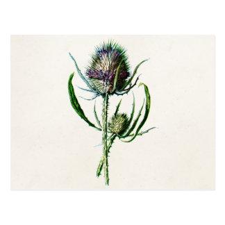 Wilde Blume der Vintagen alten schottischen Postkarten