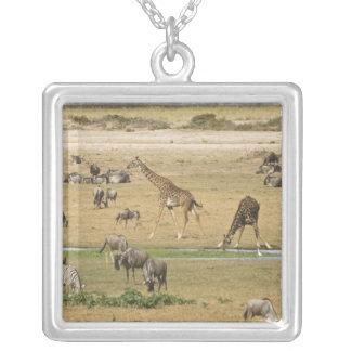 Wildebeests, Zebras und Giraffen erfassen an a Versilberte Kette