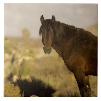 Wilder Mustang Stallion, Wheeler- Peakherde, kalt Große Quadratische Fliese