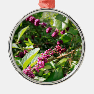 Wildes Beautyberry Bush draußen an sonnigem Silbernes Ornament