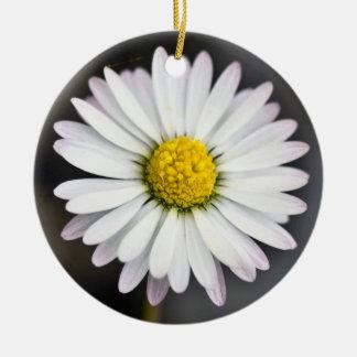 Wildes Gänseblümchen weiß und gelb Rundes Keramik Ornament