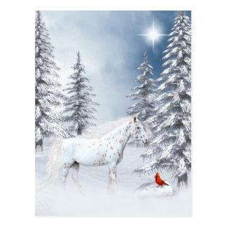 Winter Appaloosa Postkarte