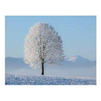 Winter-Baum Postkarte