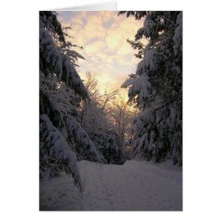 Winter-Kiefern-Sonnenaufgang-Fotografie-Anmerkung Mitteilungskarte