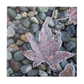Wir, Wa, Bainbridge Insel. Früher Morgen Frost 2 Keramikfliese