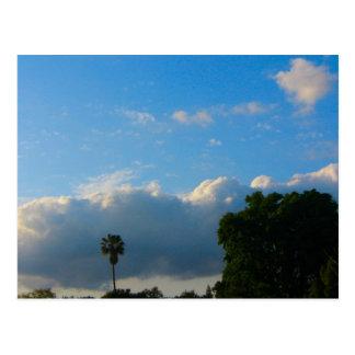 Wolken-Palme Postkarte