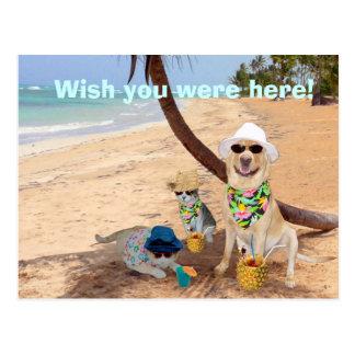 Wunsch waren Sie hier! Postkarten