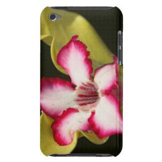 Wüste-Rose (Adenium Obesum), Südafrika Barely There iPod Hüllen