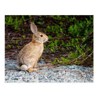 Wüsten-Waldkaninchen-Kaninchen Postkarte
