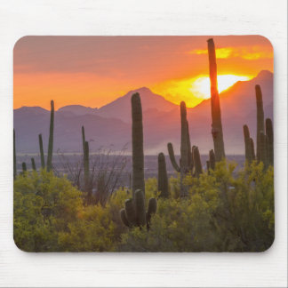 Wüstenkaktussonnenuntergang, Arizona Mousepad