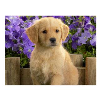 Yellow Labrador Puppy Postkarte