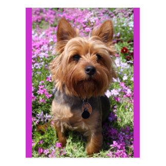 Yorkshire-Terrier-Welpen-Hunderaum-lila Postkarte