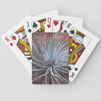 Yucca in der Wüste Spielkarte