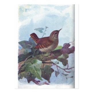Zaunkönig Postkarte