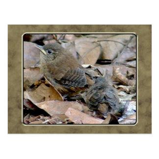 Zaunkönig-Vogelbaby-Postkarte Postkarte