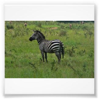 Zebra-Druck Photo Drucke