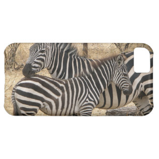 Zebra iPhone 5C Hülle