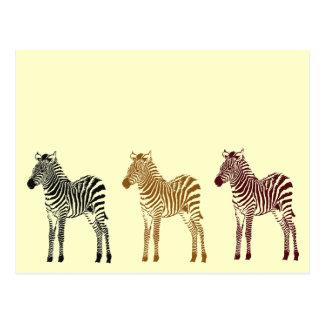 Zebras Postkarte