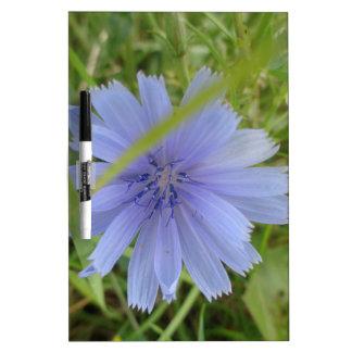 Zichorie-blaue lila Blume mit Blumen Trockenlöschtafel