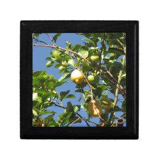 Zitrone trägt Früchte, hängend am Baum gegen den Erinnerungskiste