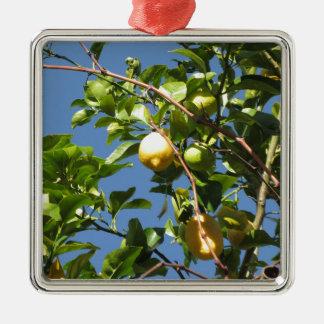 Zitrone trägt Früchte, hängend am Baum gegen den Quadratisches Silberfarbenes Ornament