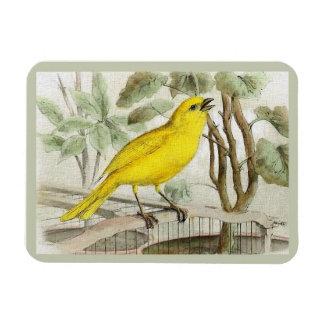 Zitronengelbe Vintage Illustration Magnet