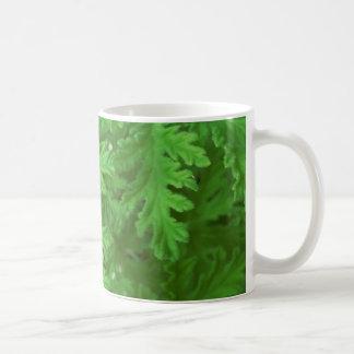 Zitronengras-Pflanzen-Beschaffenheit Tasse