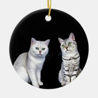 Zwei britische kurze Haarkatzen auf schwarzem Keramik Ornament