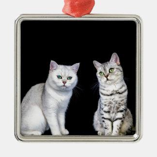 Zwei britische kurze Haarkatzen auf schwarzem Silbernes Ornament
