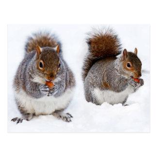 Zwei Eichhörnchen-beschäftigte Essennüsse Postkarte